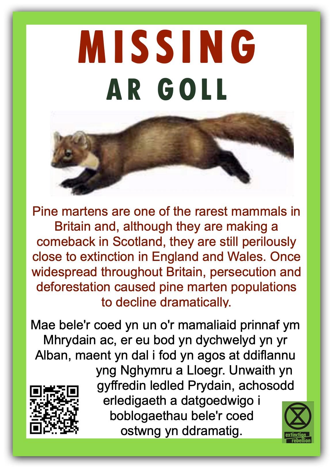 Pine-Marten-poster-bi-lingual-jpeg.jpg